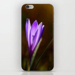 Bright Purple Spring Crocus iPhone Skin