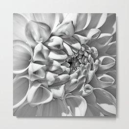 Crysanthemum Metal Print