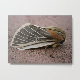 Moth  in my garden Metal Print