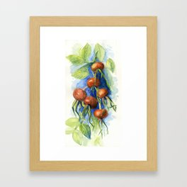 Dog-rose Berries Framed Art Print