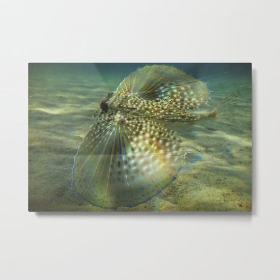 Blue Ray Metal Print