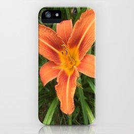 Hemerocallis Day Lily iPhone Case
