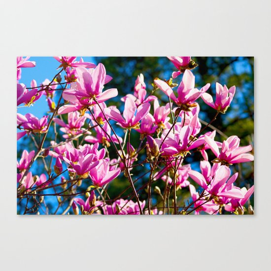 Pink Flowers In The Sun Canvas Print