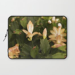 Christmas Cactus Buds and Blooms Laptop Sleeve