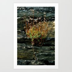 The Power of Nature  Art Print