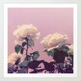 Vintage Spring Pearl White Roses Lavender Sky Art Print