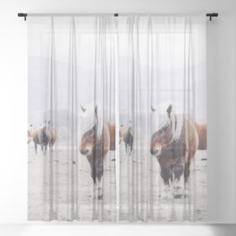 Wild horses - Portrait of beautiful Icelandic horses on field in winter with white snow Sheer Curtain