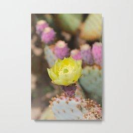 Opuntia Cactus Metal Print