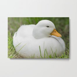 white male callduck / call duck Metal Print