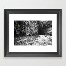 Fern Canyon Framed Art Print