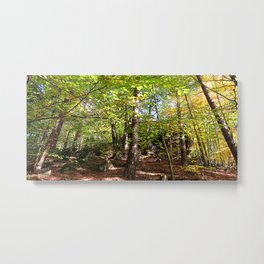 MM - Autumnally forest Metal Print