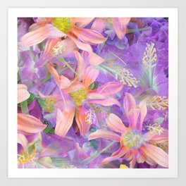 blooming pink daisy flower with purple flower background Art Print
