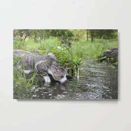 How to drink the water of the wild cat Metal Print