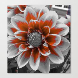 Dash Of Color Amongst Black And White Flower Canvas Print
