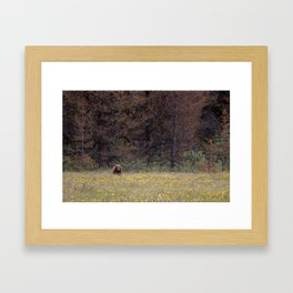 Canadian Grizzly Bear Framed Art Print