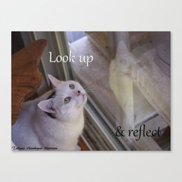 Cat Reflected: Look Up & Reflect Canvas Print
