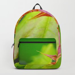 Maple 2 Backpack