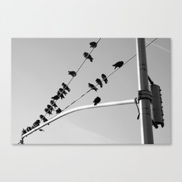 Birds Asleep Canvas Print