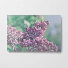Pastel ultra violet colors. A branch of lilac close-up. Metal Print
