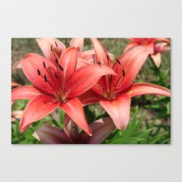 Daylilies Canvas Print