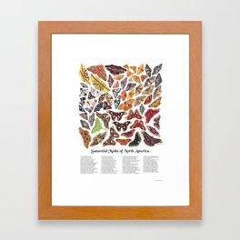 Saturniid Moths of North America Framed Art Print