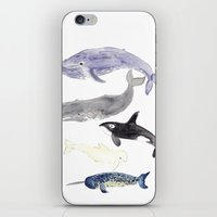whales iPhone & iPod Skins featuring WHALES by Shannon Kirsten