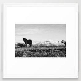 Three Icelandic Horses Framed Art Print