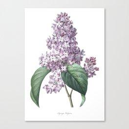 Nature, botanical print, flower poster art of Lilac Canvas Print