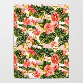 Flowering garden nasturtiums Poster