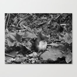 Black and White Squirrel Canvas Print