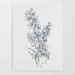 Blue Delphinium Flowers Poster