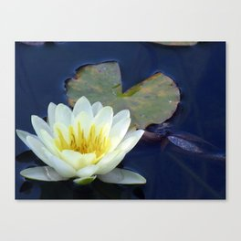 Water Lilly 2 Canvas Print
