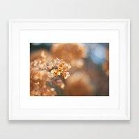 gold glitter Framed Art Prints featuring Gold Glitter by Katie Kirkland Photography