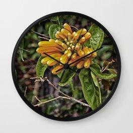 Beautiful buds of orange trumpet flower Wall Clock