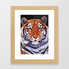 Tiger Sultan of Siberia Framed Art Print