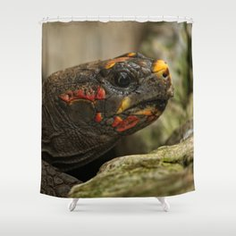 Red-Footed Tortoise Shower Curtain