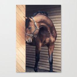 horse collection. sportive Canvas Print