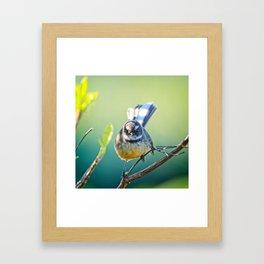Fantail Fan Framed Art Print