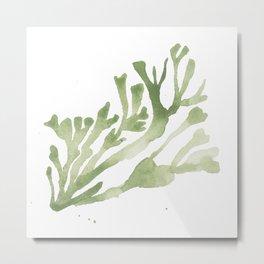 Seaweed Print Metal Print