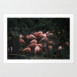 Flamingo's Company Art Print