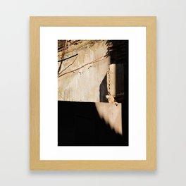 Cat in the Spanish Sun Framed Art Print