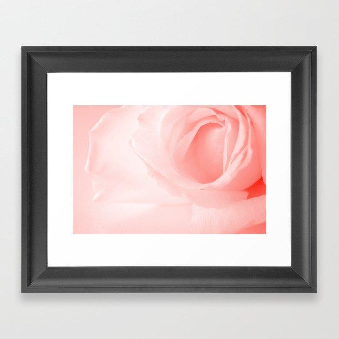 Coral Rose Close-up Framed Art Print
