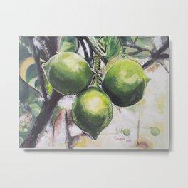 Limones criollos Metal Print