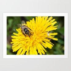 Bees tongue Art Print
