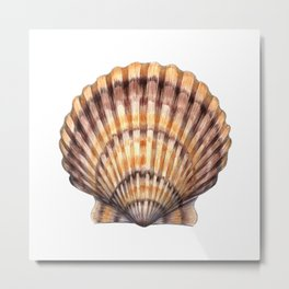 Bay Scallop Metal Print