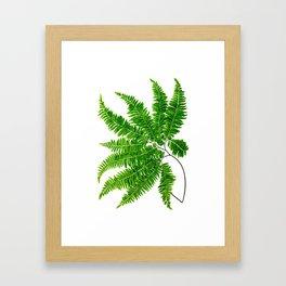 Antique Fern Print No.5 Green Nature Botanical Art Framed Art Print