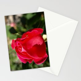 """Rose Bug"" Stationery Cards"