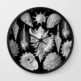 Black and White Beach Shells Wall Clock