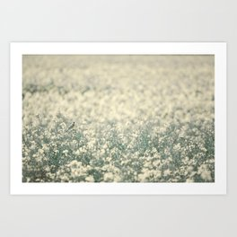 Alone in the canola field Art Print