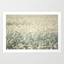 Alone in the canola field Art Print
